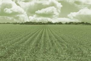 farm-fields-tonal