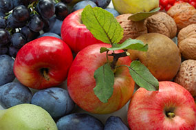 fruits-guide-toplevel