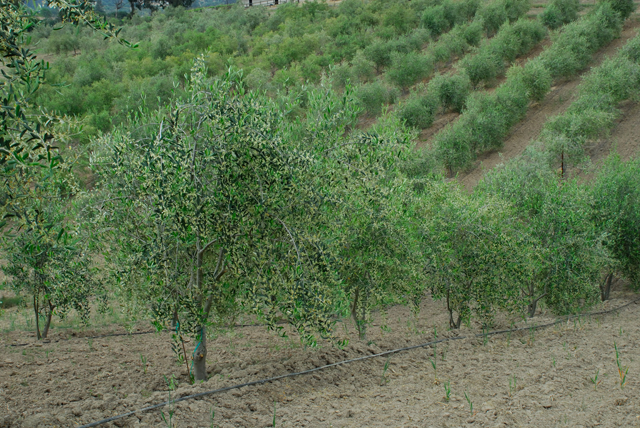 Artisan Olive Oil Producers Receive Farmer of the Year Award | MBCFM